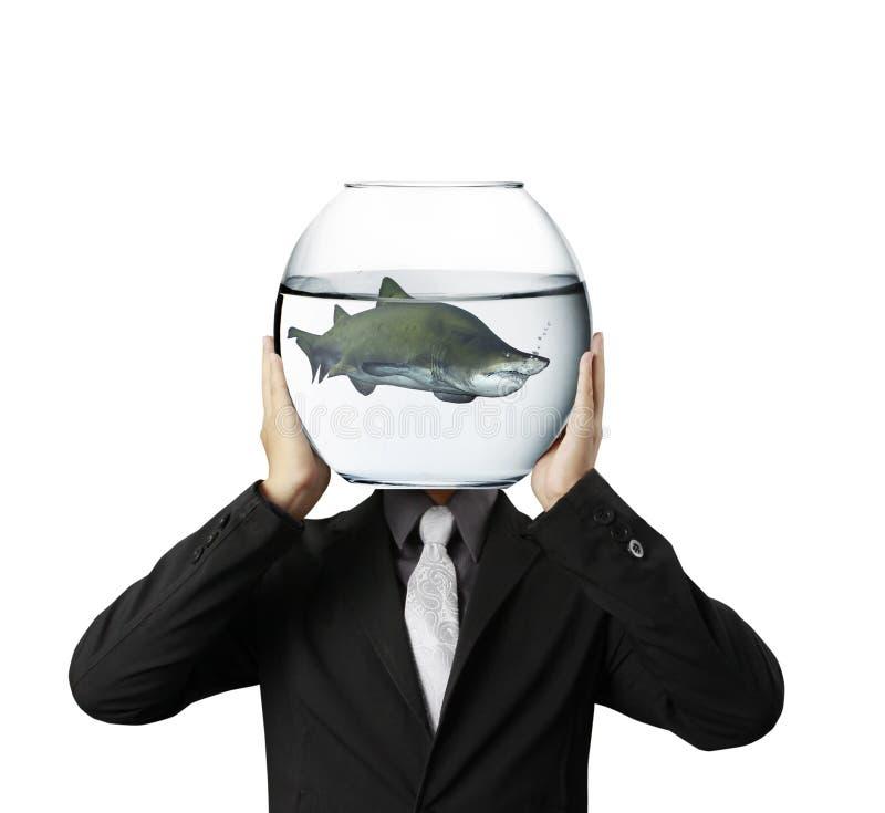 鲨鱼在水族馆手上 库存图片