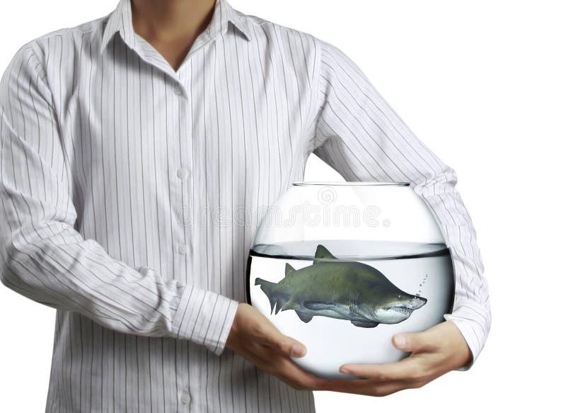 鲨鱼在水族馆手上 免版税库存图片