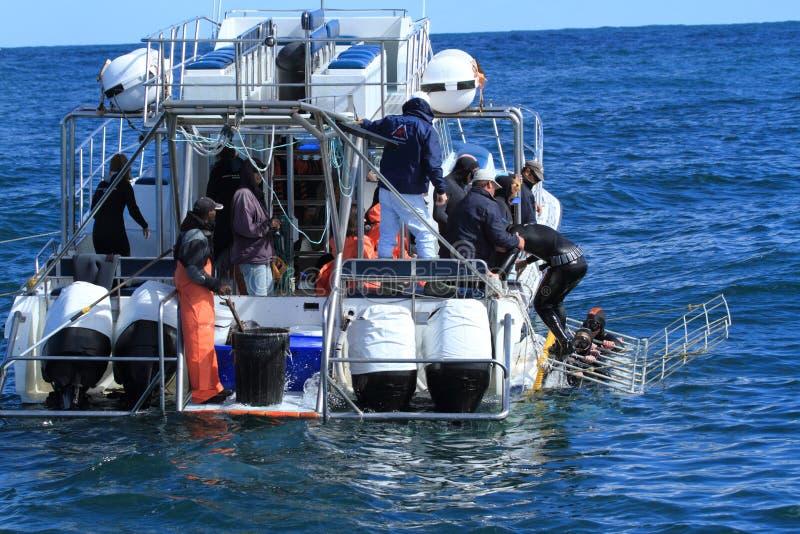 鲨鱼潜水 库存图片
