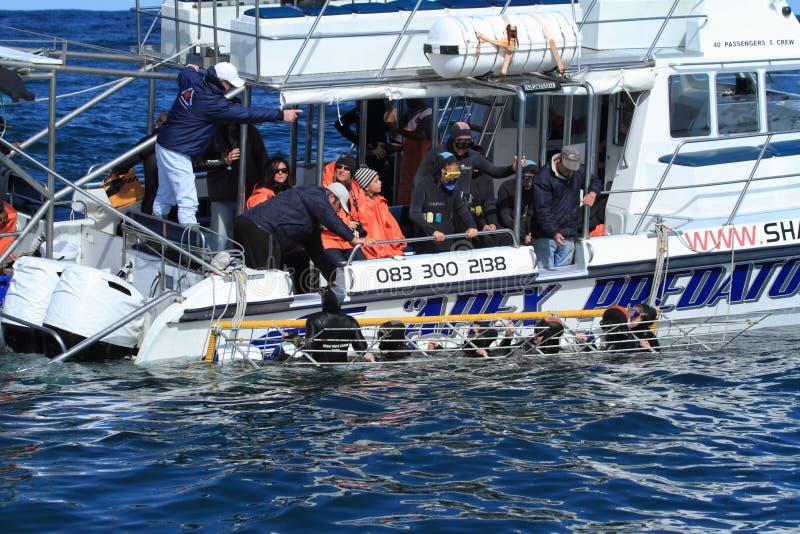 鲨鱼潜水 免版税库存图片