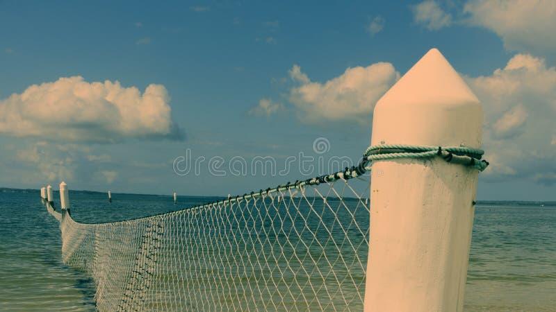 鲨鱼网在海洋 库存图片