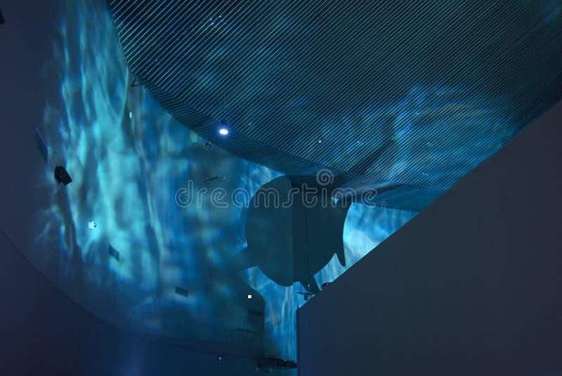 鲨鱼阴影的看法 图库摄影