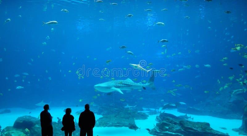 鲨鱼鲸鱼 免版税图库摄影