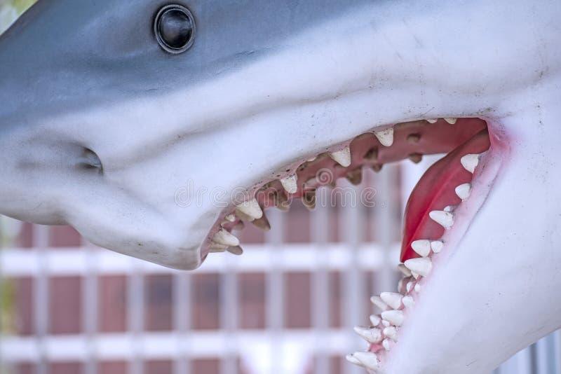 鲨鱼,头的模型 库存照片