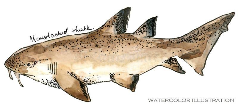 鲨鱼 水下的生活水彩例证 动物背景美好的迷离上色克罗地亚重点foto章鱼octpous海运多种非常 向量例证