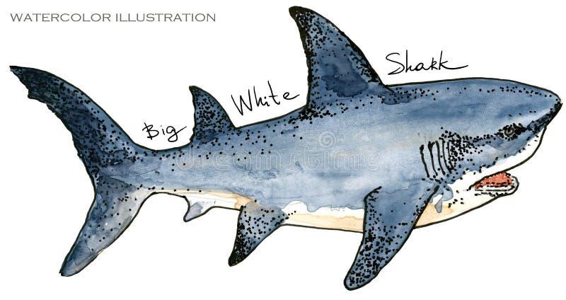 鲨鱼 水下的生活水彩例证 动物背景美好的迷离上色克罗地亚重点foto章鱼octpous海运多种非常 皇族释放例证