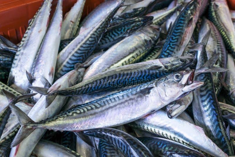 鲭类scombrus,verdel,大王马鲛鱼,鲣类销售  库存图片