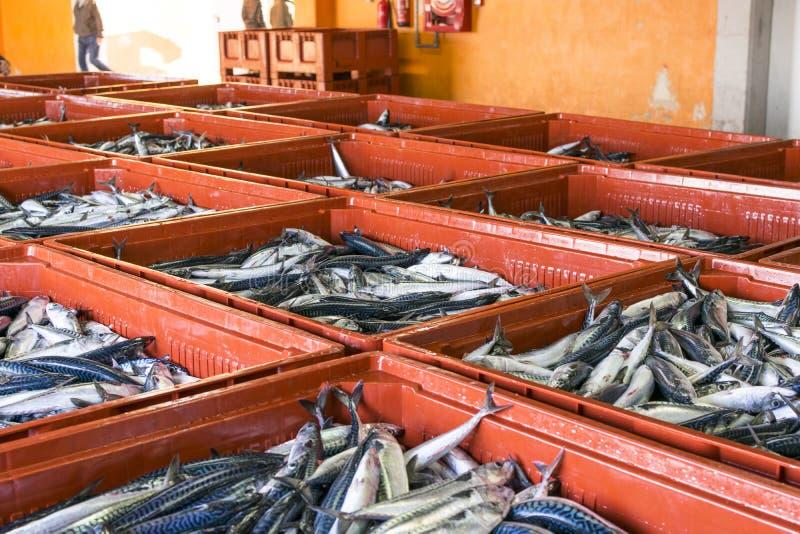 鲭类scombrus,verdel,大王马鲛鱼,鲣类销售  免版税图库摄影