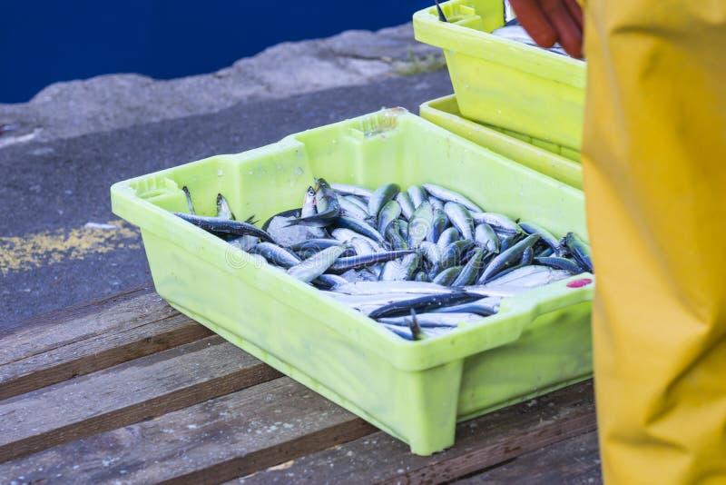 鲭类scombrus,verdel,大王马鲛鱼,鲣类销售  库存照片