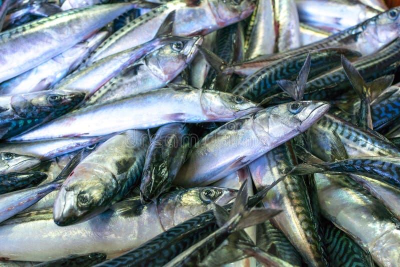 鲭类scombrus,verdel,大王马鲛鱼,鲣类,鲥鱼销售  库存图片