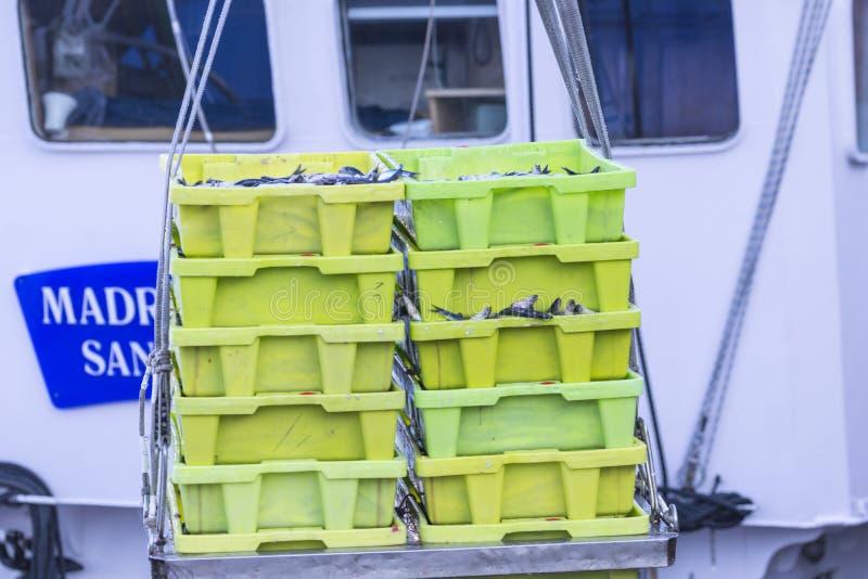 鲭类scombrus,verdel,大王马鲛鱼,鲣类,鲥鱼销售  库存照片