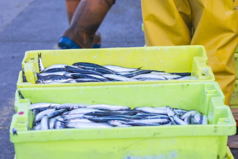 鲭类scombrus,verdel,大王马鲛鱼,鲣类,鲥鱼销售  免版税库存照片