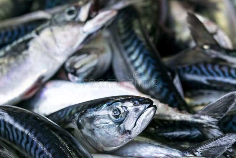 鲭类scombrus,verdel,大王马鲛鱼,鲣类,鲥鱼销售  免版税图库摄影