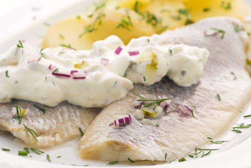鲱鱼调味汁 库存照片