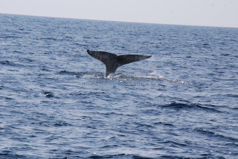 鲸鱼传说 库存图片