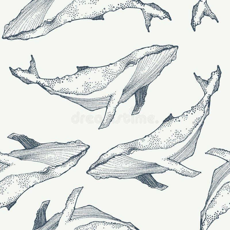 鲸鱼无缝的样式 动物背景 也corel凹道例证向量 库存例证