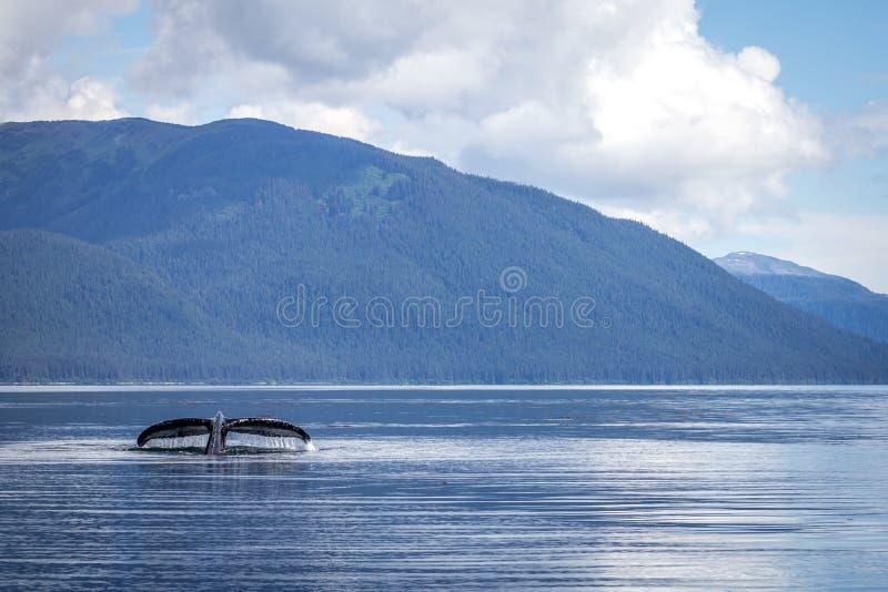 鲸鱼比目鱼 库存照片