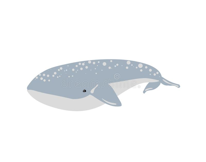 鲸鱼的传染媒介例证 库存例证