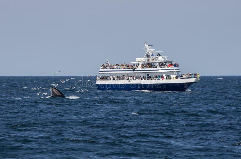 鲸鱼看守人和海鸥 免版税图库摄影
