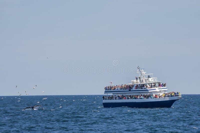 鲸鱼看守人和海鸥 库存照片
