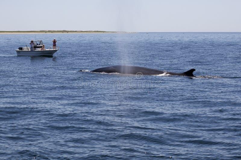 鲸鱼看守人 库存照片