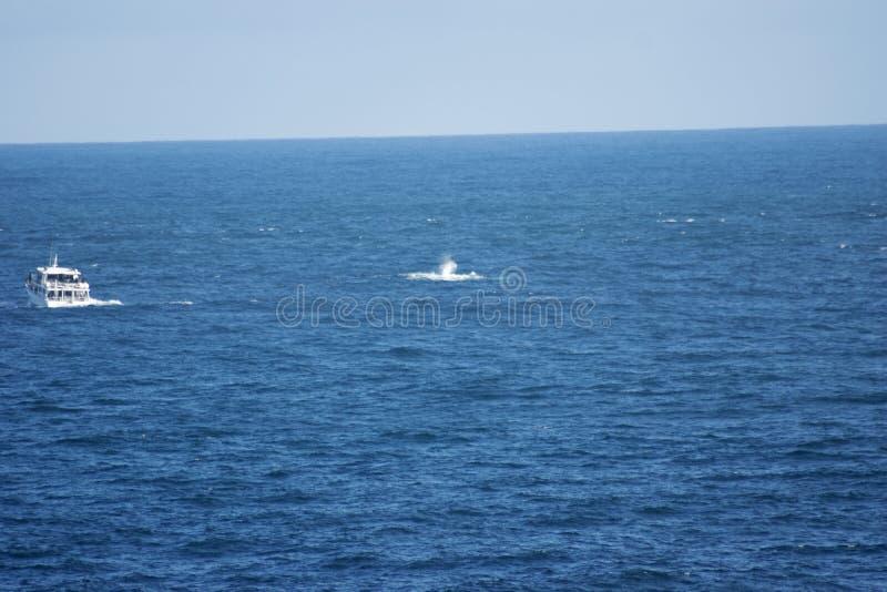 鲸鱼观看的小船、驼背鲸和小牛 免版税库存照片