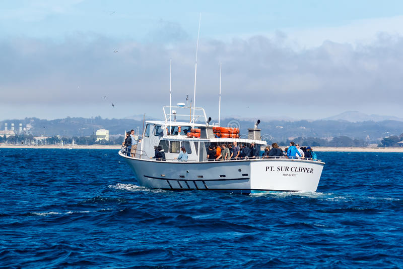 鲸鱼观看的船 库存照片