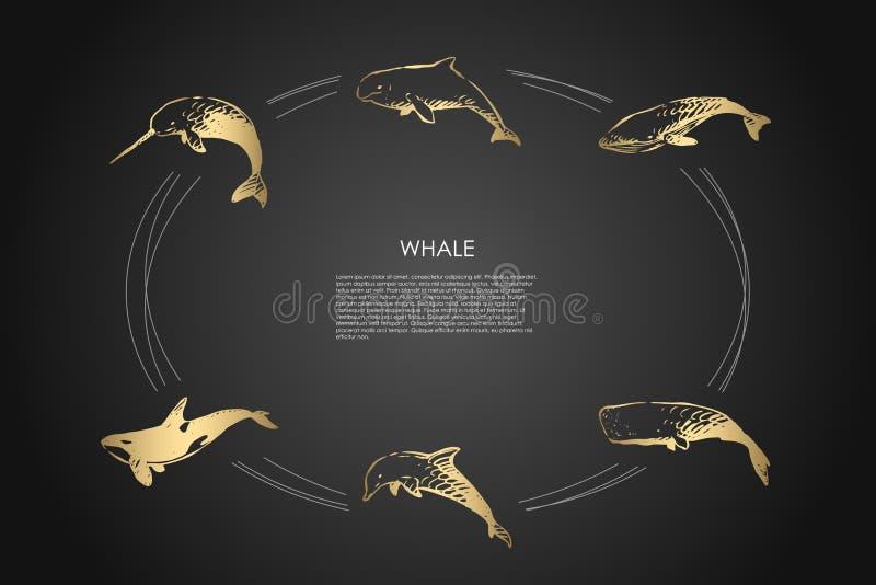 鲸鱼-不同-海豚、精液和虎鲸传染媒介概念集合 向量例证