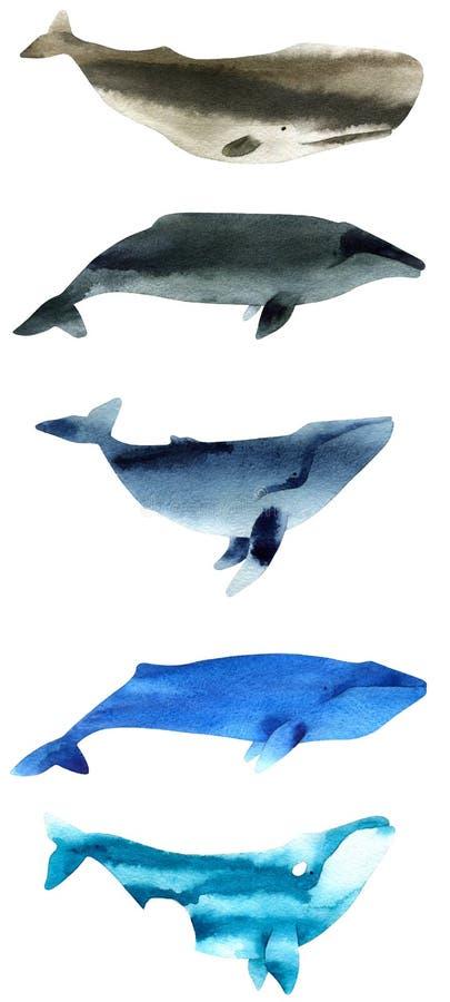 鲸鱼水彩剪影  背景指纹例证白色 库存照片
