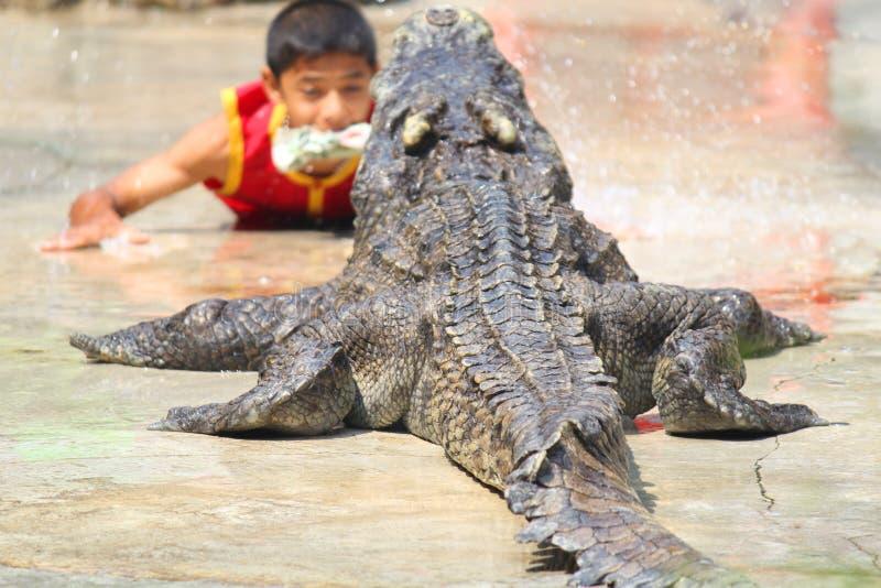 鳄鱼农场和动物园,鳄鱼农场泰国 免版税库存图片
