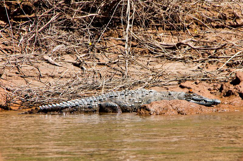 鳄鱼在Canyon del苏米德罗在恰帕斯州,墨西哥 库存照片