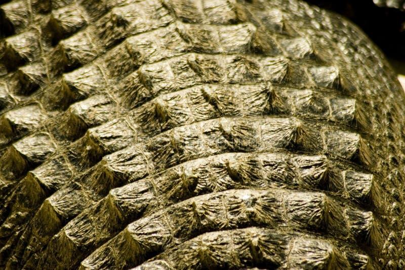鳄鱼皮肤 图库摄影