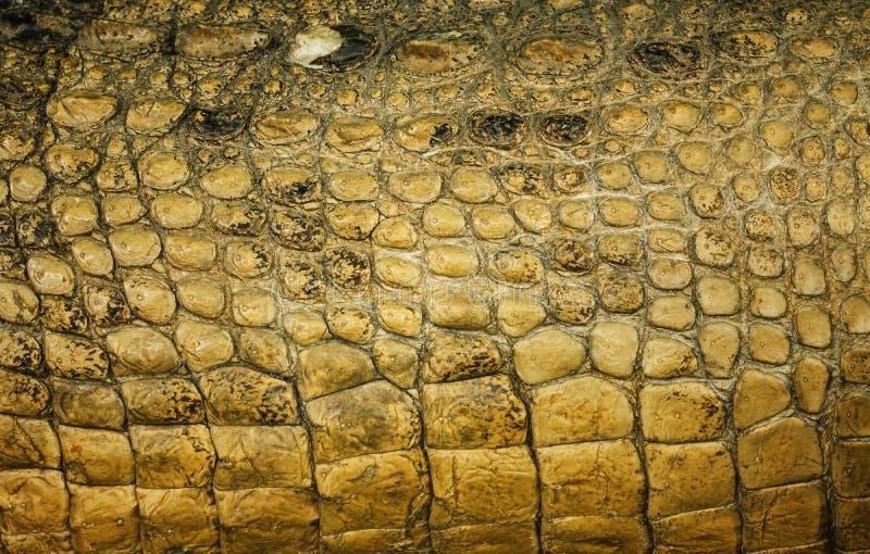 鳄鱼皮肤 库存图片