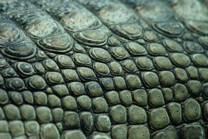 鳄鱼纹理 免版税图库摄影