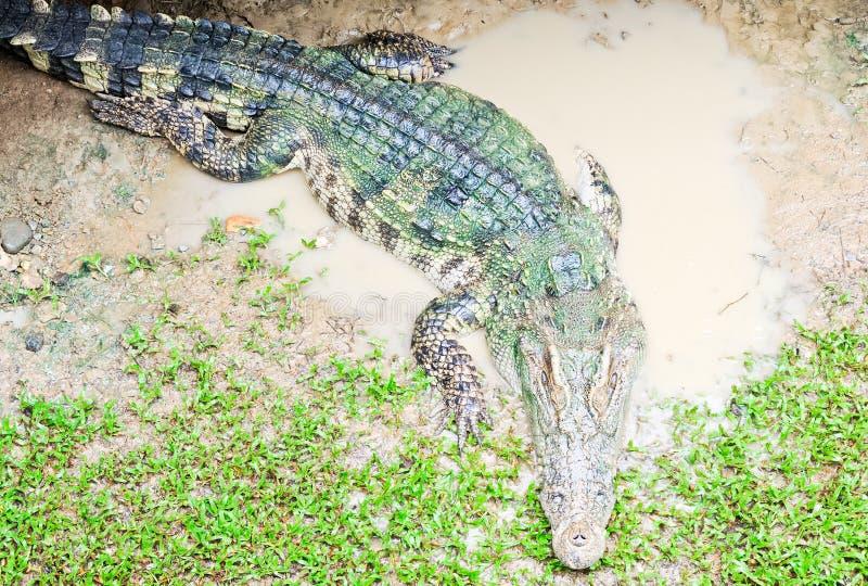 鳄鱼谎言trought年轻人 图库摄影
