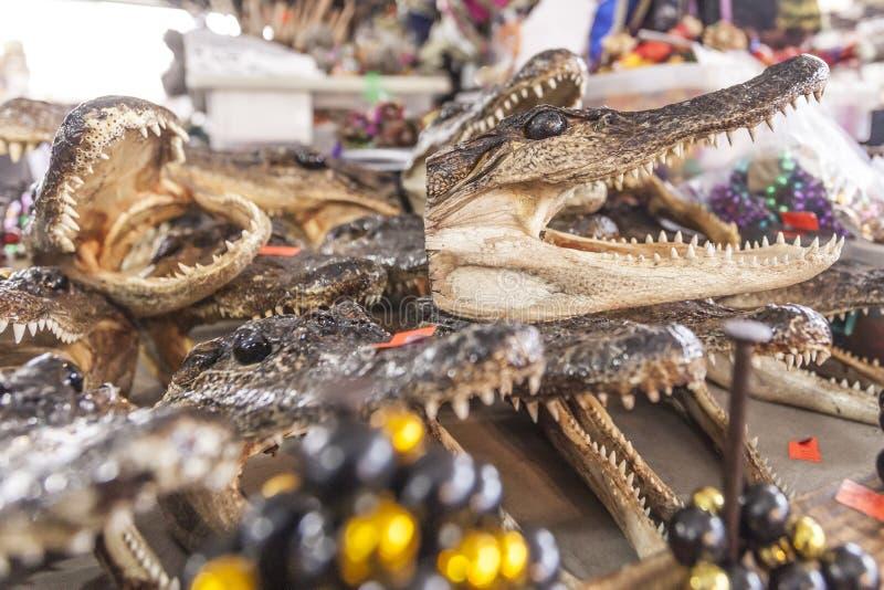 鳄鱼头待售在新奥尔良,路易斯安那 免版税库存图片
