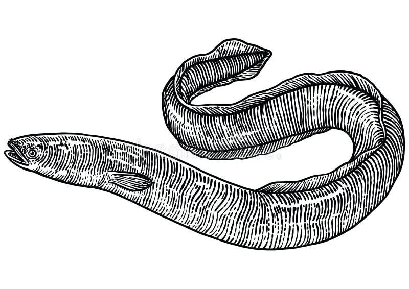 鳗鱼例证,图画,板刻,线艺术,现实 皇族释放例证