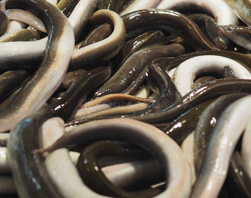 鳗鱼待售在法鲁葡萄牙 免版税库存照片