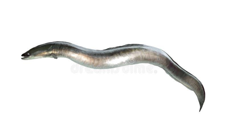 鳗鱼 向量例证