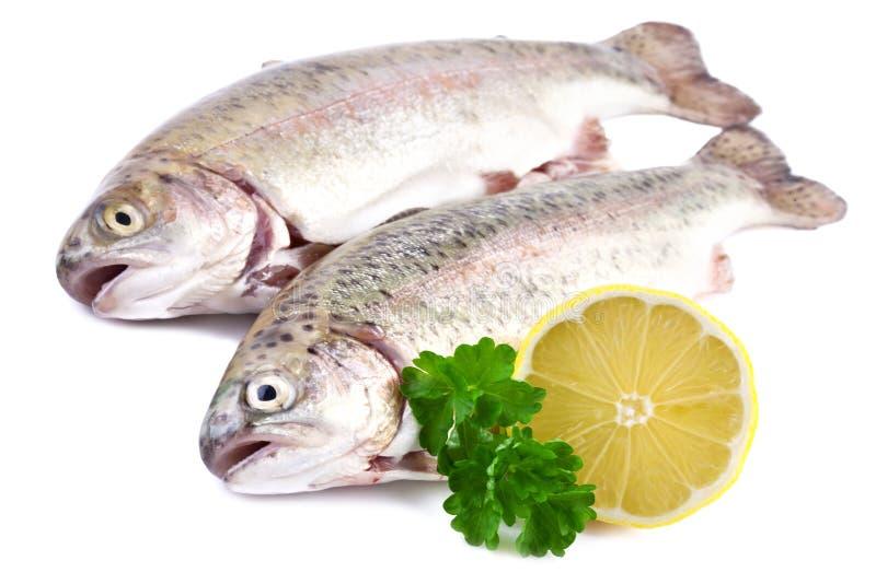 鳟鱼鱼 免版税库存图片