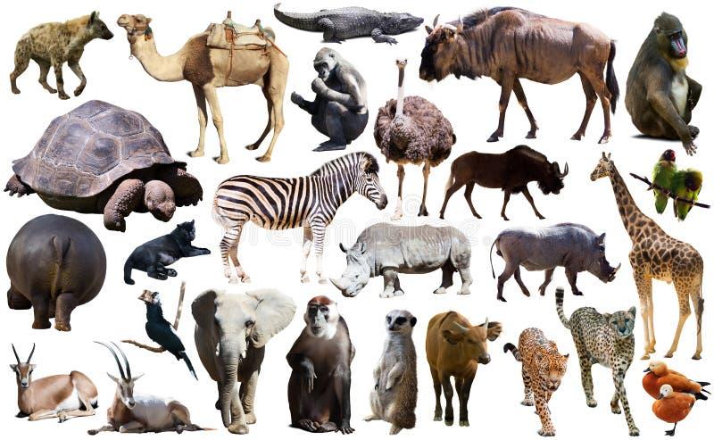 鸟、哺乳动物和非洲的其他动物隔绝了 免版税图库摄影