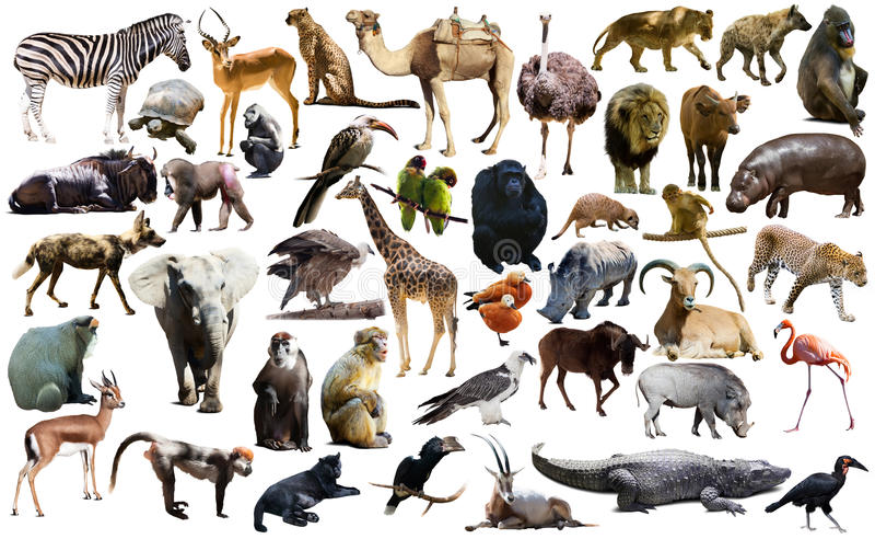 鸟、哺乳动物和非洲的其他动物隔绝了 库存图片