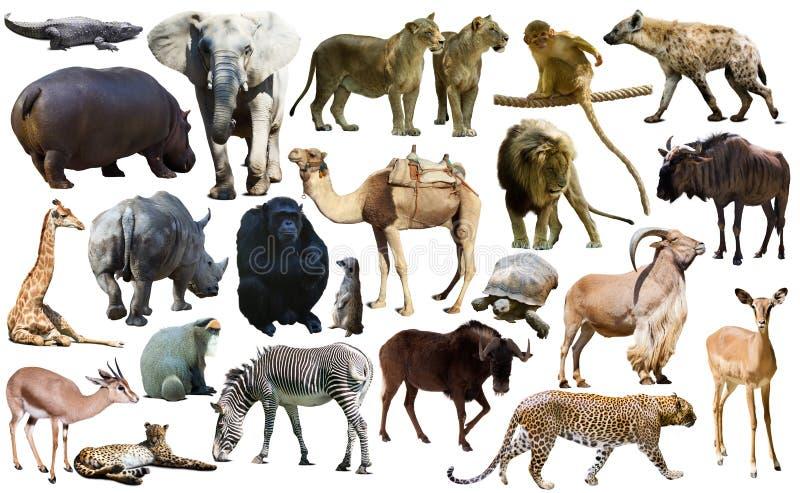 鸟、哺乳动物和非洲的其他动物隔绝了 免版税库存照片