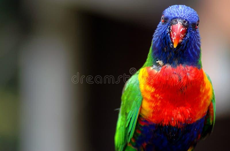 鸟上色了 免版税库存图片