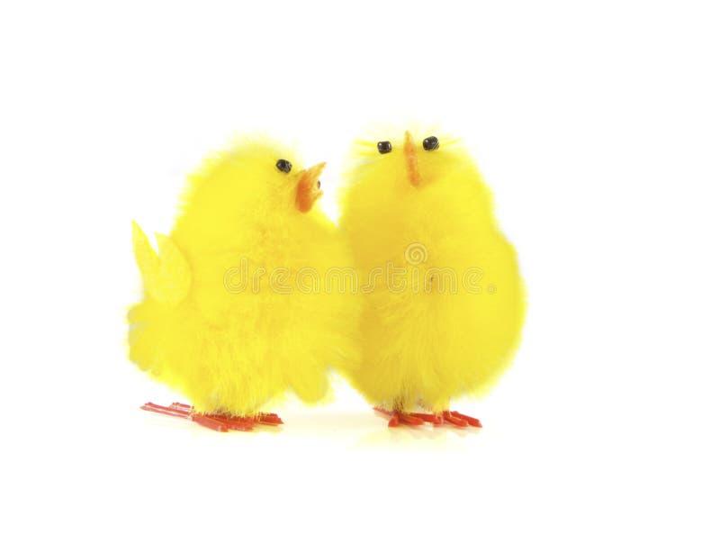 鸟二 免版税库存图片