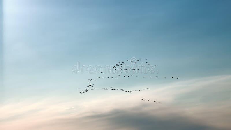 鸟从遥远的国家到达 鸟群  免版税库存图片