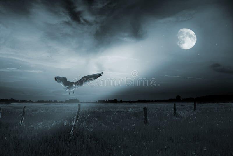 鸟偏僻的月光 免版税库存照片