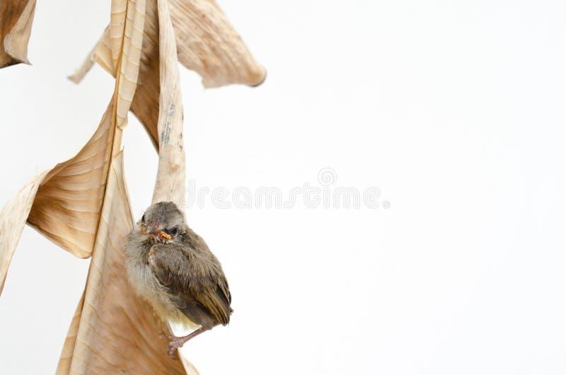 鸟出生的新 库存照片