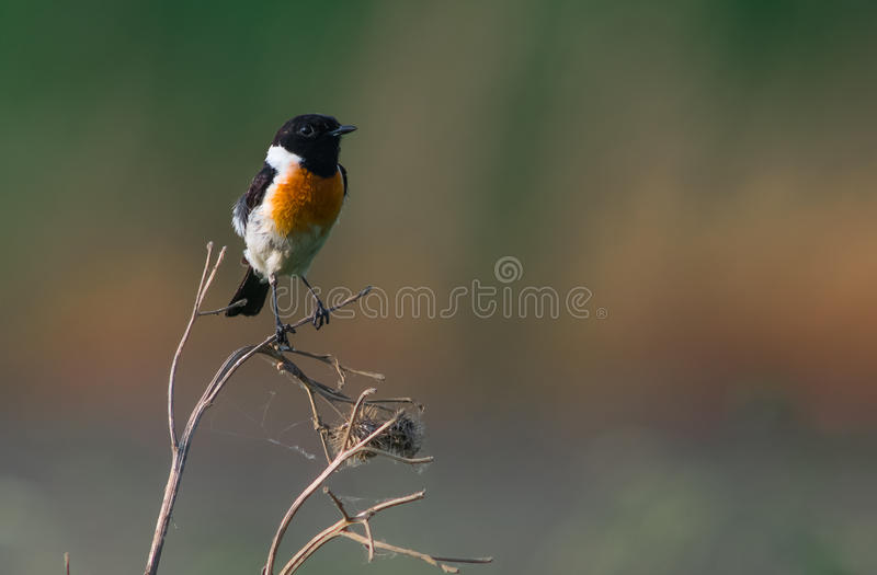 鸟分行本质俄国原野世界 库存图片