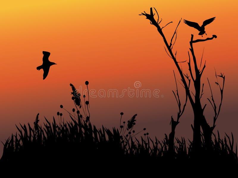 鸟剪影结构树 免版税库存照片